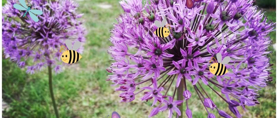 Invită fluturii și albinele la masă, cu 4 plante din grădina ta